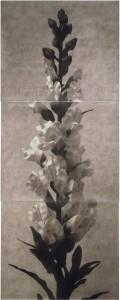 Orquidea III: Gymnadenia Conopea