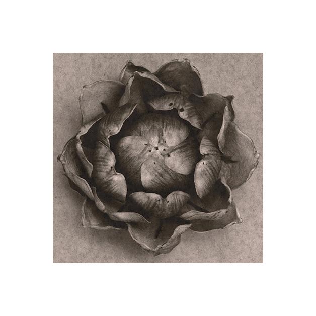 sergio-zavattieri-lotus_-flower_2011